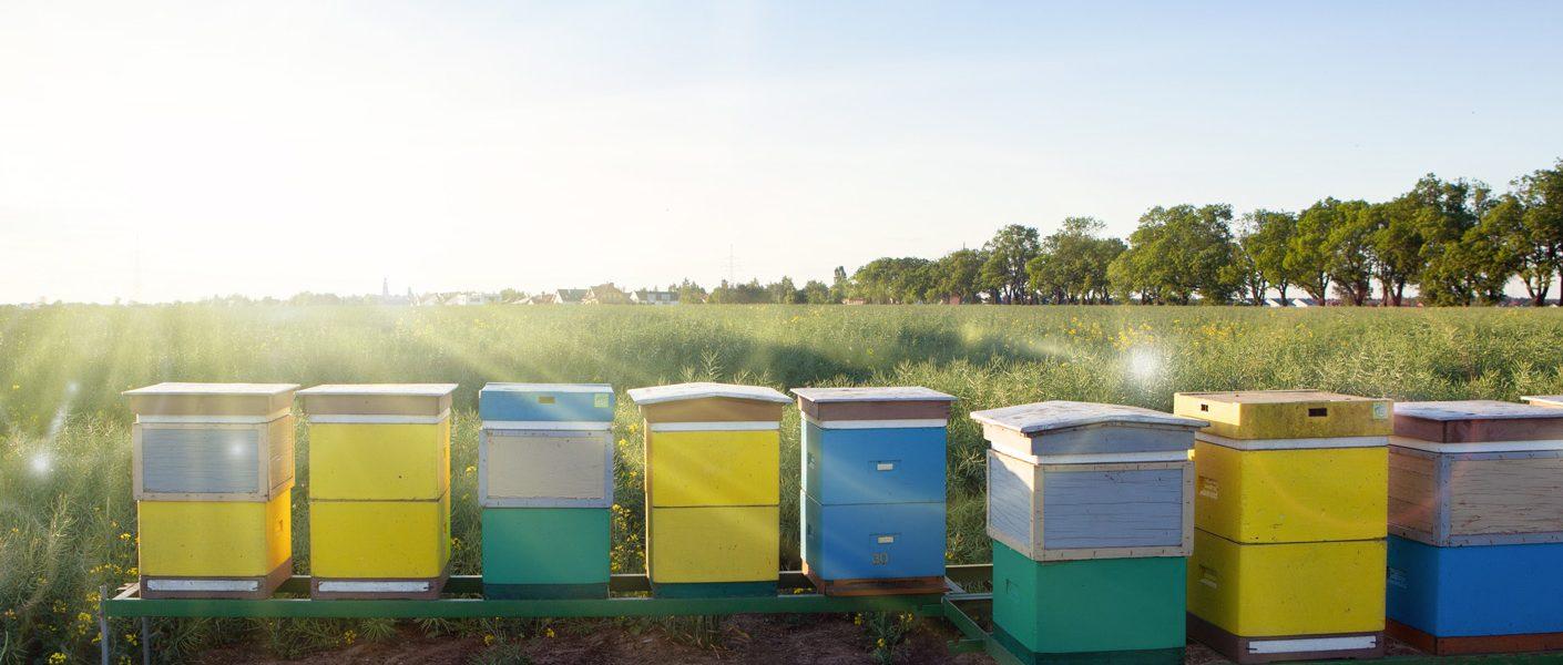 Dlaczego Mospilan 20 SP jest nietoksyczny dla pszczół, a toksyczny dla szkodliwych gatunków owadów?