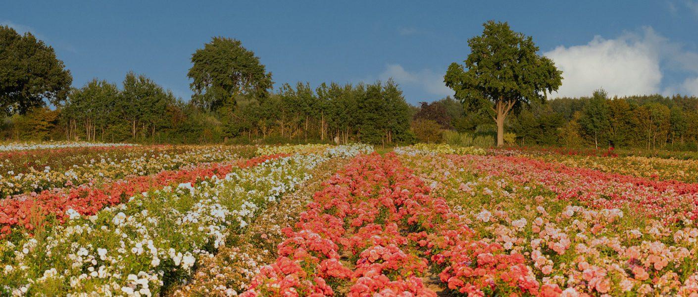 Sposoby zwalczania szkodników roślin ozdobnych