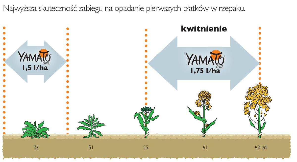 stosowanie yamato w rzepaku