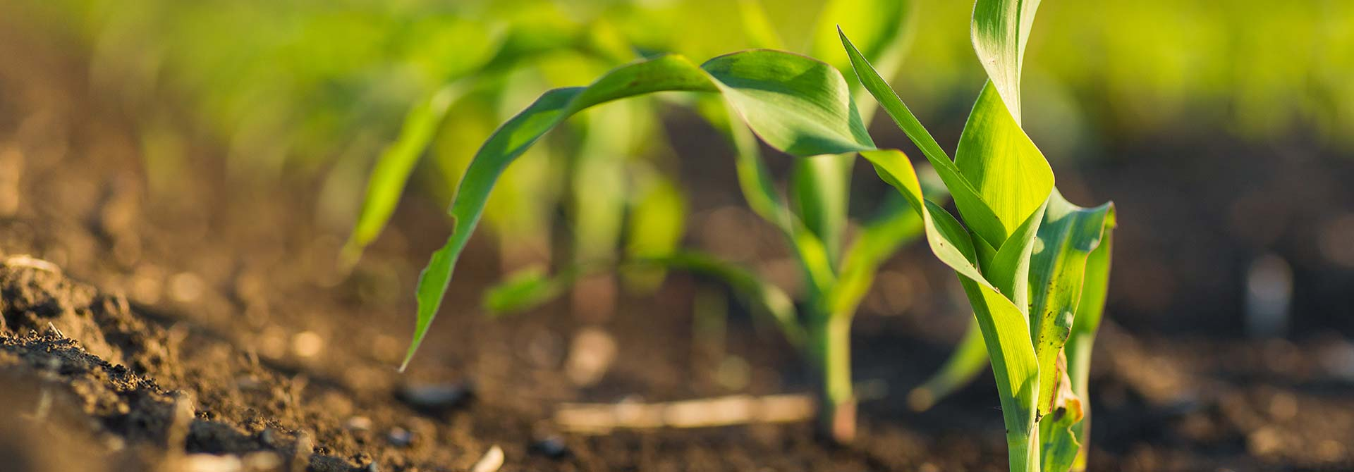 Nowość – herbicyd Click Premium