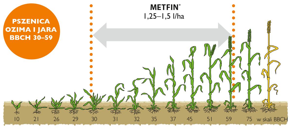 Metfin stosowanie w pszenicy