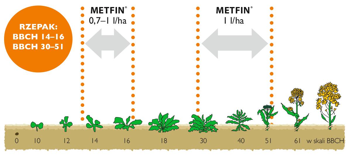 Metfin stosowanie w rzepaku