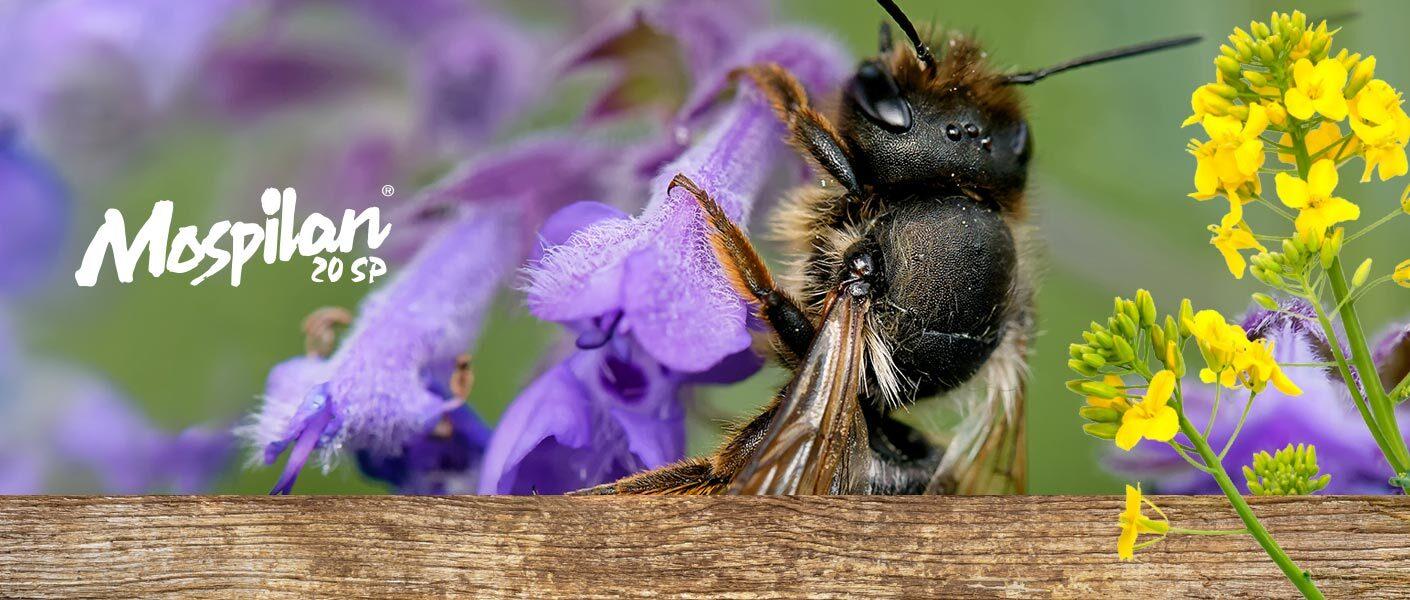 Buduj z nami populację owadów zapylających